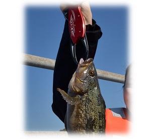 2016happyfishing1.jpg